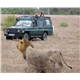 African safaris, tanzania travel
