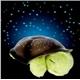 Sleeping Turtle Projector Night Light